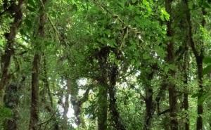floresta ecossistema sustentável